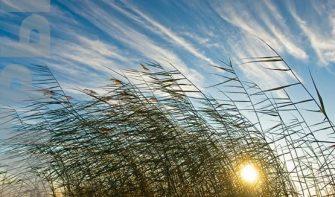 игра обучение Ветер и Солнце