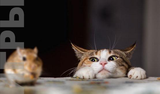 игра во дворе Кошки-мышки